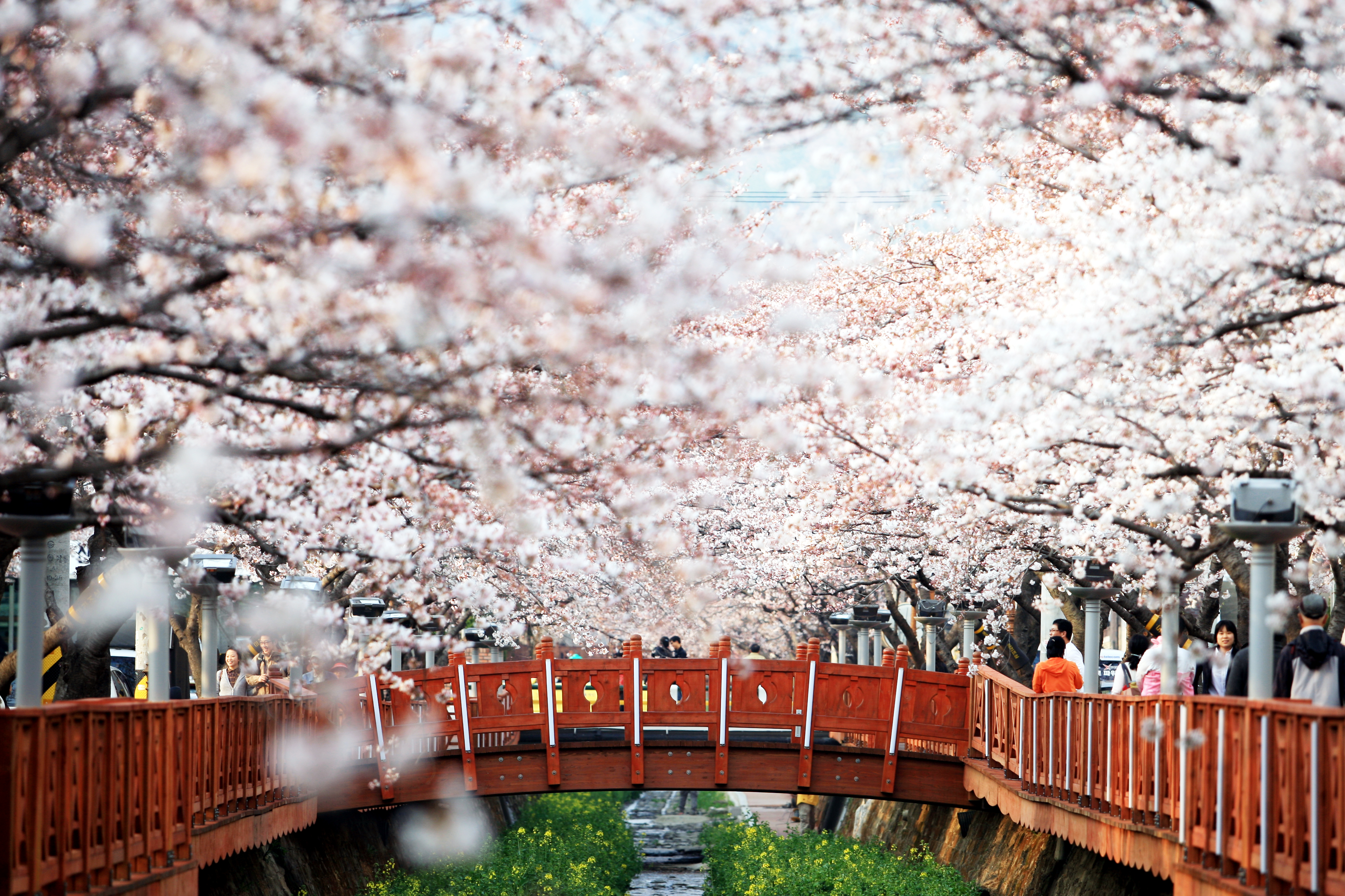 Xin visa Hàn Quốc khó hay dễ?